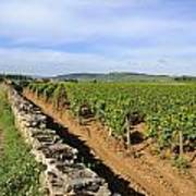 Stone Wall. Vineyard. Cote De Beaune. Burgundy. France. Europe Art Print