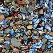 Stones And Seashells Art Print