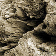 Stonewood Canyon - Square - Sepia Tone - Wonderwood Collection - Olympic Peninsula Wa  Art Print