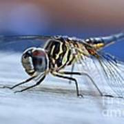 Stop By Tiger Dragon Fly Art Print by Peggy Franz