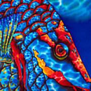Stoplight Parrotfish Art Print