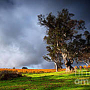 Storm Onto A Vineyard Print by Boon Mee