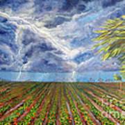 Storm Over Homestead Art Print