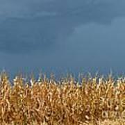 Stormy Corn Art Print