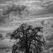 Stormy Tree Art Print