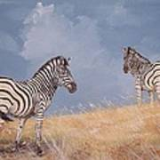 Stormy Zebra Art Print
