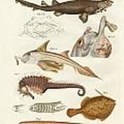 Strange Cartilageous Fish Art Print