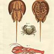Strange Crabs Art Print
