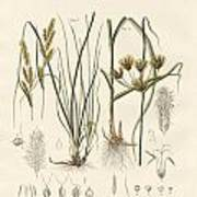 Strange Grasses Art Print