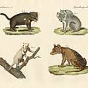 Strange Marsupials Art Print