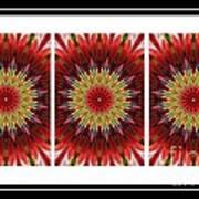 Strawberry Explosion Triptych - Kaleidoscope Art Print