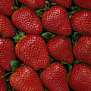 Strawberry Flats Art Print