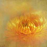 Strawflower IIi With Textures Art Print