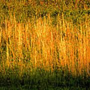 Straw Landscape Art Print