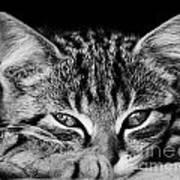 Stray Kitten Art Print