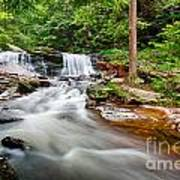 Stream At Ricketts Glen Art Print