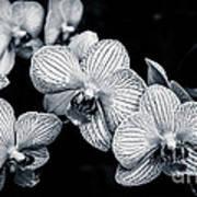 Stream Of Orchids Art Print