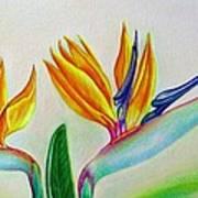 Strelitzia - Together Art Print
