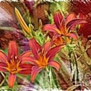 Striking Daylilies - Digital Art Art Print