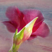 Striking Hibiscus Flower Art Print