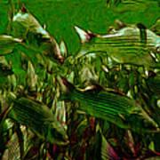 Striped Bass - Painterly V2 Art Print