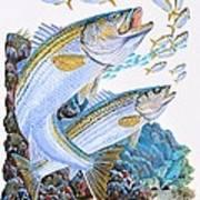 Striped Bass Rocks Art Print