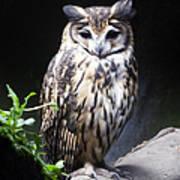 Striped Owl Art Print