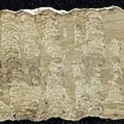 Stromatolite Art Print by Science Photo Library