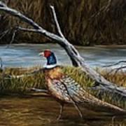 Strutting Pheasant Art Print