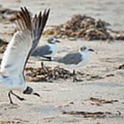 Strutting Seagull On The Beach Art Print