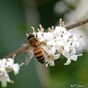 Study Of A Bee Art Print