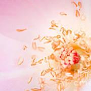 Study Of A Rose One Art Print