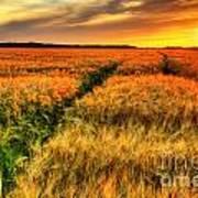 Stunning Sunset Over Cereal Field Art Print