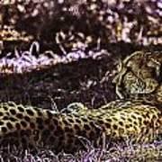 Styled Environment-the Modern Trendy Cheetah Art Print