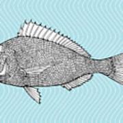 Stylized Fish. Sea Fish. Dorado. Black Art Print