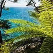 Subtropical Forest Of Abel Tasman Np In New Zealand Art Print