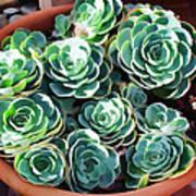 Succulent 13 Art Print