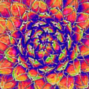 Succulent 7 Art Print