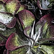 Succulent At Backbone Valley Nursery Art Print