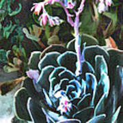 Succulent Flower Caught In A Moonbeam Art Print