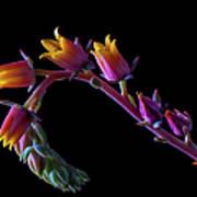 Succulent Flowers On A Stalk Art Print