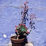 Succulent Blue Art Print