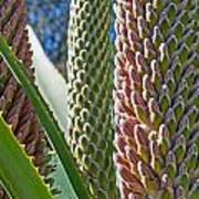 Succulents IIi Art Print