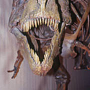 Sue The Tyrannosaurus Rex Art Print