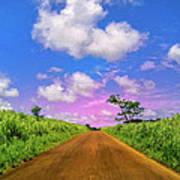 Sugar Cane Sunrise Art Print