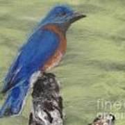Summer Blue Bird Art Print