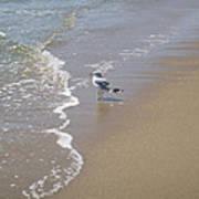 Summer Day Of A Gull 2 Art Print