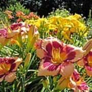 Summer Daylilies Art Print
