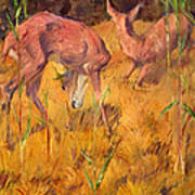 Summer Deer Art Print