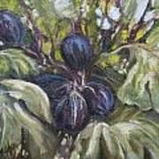 Summer Figs II Art Print
